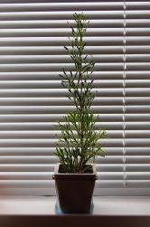 Propiedades fisicoqu micas de las plantas algete - Inmobiliaria algete ...